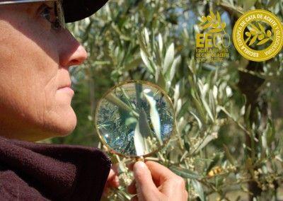 Curso-Iniciacion-a-la-olivicultura-para-la-excelencia-de-la-EECO_8