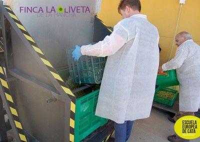 Curso-de-maestro-de-almazara-en-la-escuela-europea-de-cata-y-finca-la-oliveta-de-la-mancha_9
