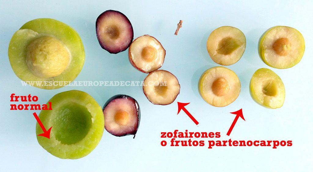 Zofairones o frutos partenocarpos