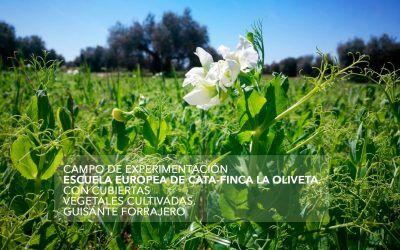 Manejo de cubiertas vegetales cultivadas (guisante forrajero)