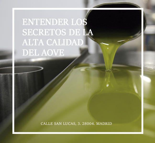 MONTAR UNA ALMAZARA. SECRETOS DEL AOVE ACEITE DE OLIVA VIRGEN EXTRA
