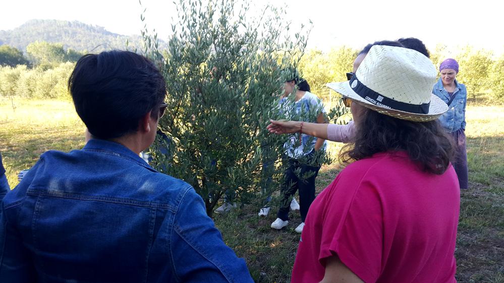 curso-galicia-aceites-de-oliva-maestro-almazara