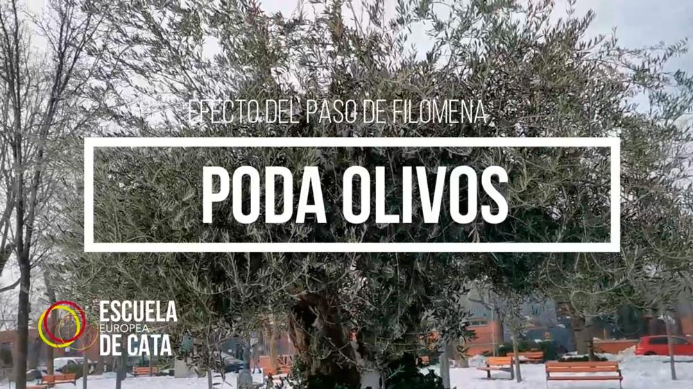INFLUENCIA DE LA PODA DEL OLIVO AL PASO DE FILOMENA