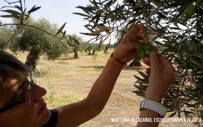 Aceite de Oliva Virgen Extra y la Dieta Mediterránea: Oportunidades alrededor de un modelo económico sostenible