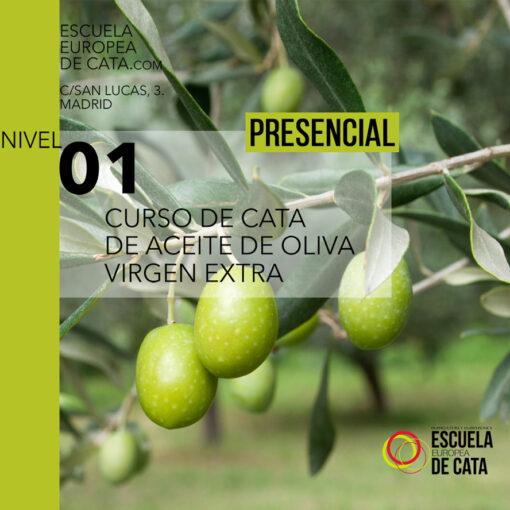 nivel 1 aceites de oliva